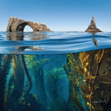 The Channel Islands - California's Galapagos